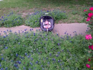 Layton in the bluebonnets